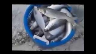 ağla balık tutmak nets to catch fish