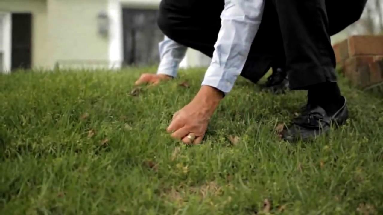 Tenacity Herbicide | GreenCast | Syngenta