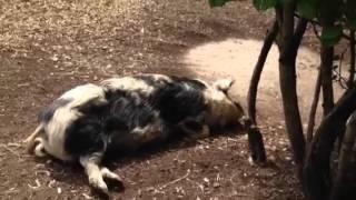 VLOG/London Zoo