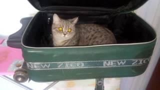 ^_^ Кошка собирается в отпуск ^_^
