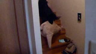大きなカンガルーの縫いぐるみを2階から持って降りるココの動画.