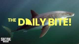 Dickie's Infamous Shark Decoy  | Countdown to Shark Week: The Daily Bite