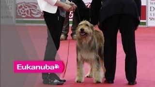 World Dog Show 2013 - Group I Judging