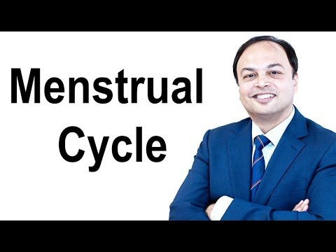 The Menstrual Cycle (Menstruation Cycle)