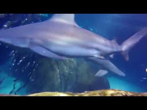 Swimming w/ Sharks: Adventure Aquarium, NJ