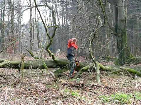 Achtung, Baum Fällt / Timber !!!!!