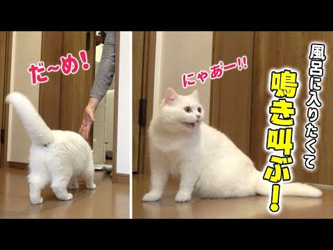 ENG) This is what happens when I give my cats cat food by hand...! from YouTube · Duration:  5 minutes 50 seconds