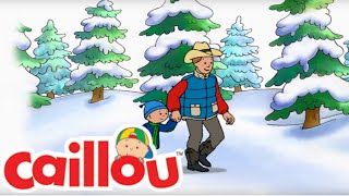 Caillou Song: The Perfect Tree For Me - Christmas Special | Cartoon for Kids