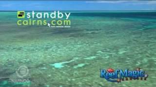 Cairns Tours - Reef Magic Thumbnail