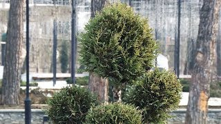 Душанбе снова станет городом — садом