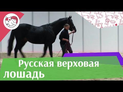 Светские девушки и их лошади