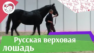 ЛОШАДИ Русская верховая порода  ЭКВИРОС 2016 на ilikepet
