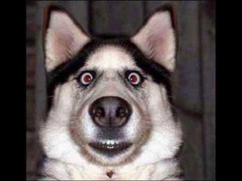 Dog Has Scared Eyes