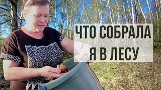 #ВЛОГ ПОВЕЗУ ВАС  В ЛЕС! Наша природа. Лес в Башкортостане весной.Первые цветы. Жизнь в деревне