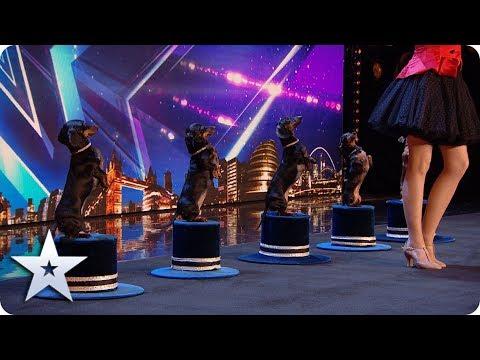 Doggies' Got Talent! Diana Vedyashinka and her DANCING dogs! | BGT 2020