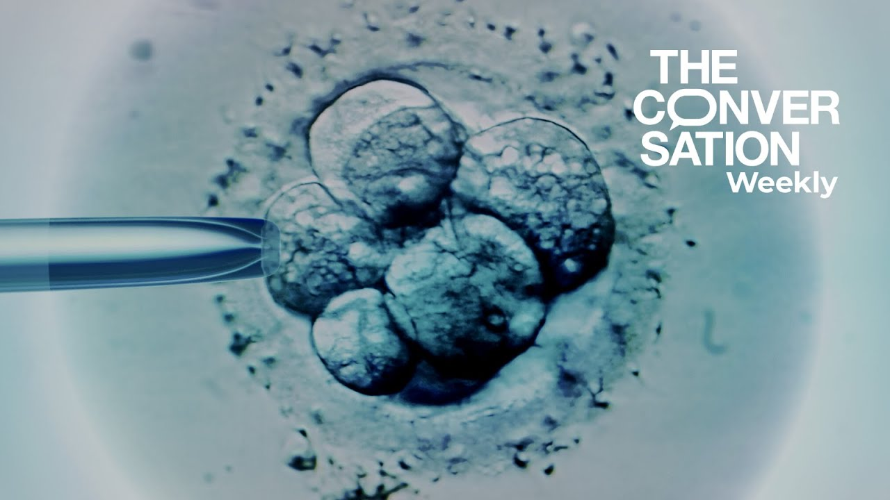Lab-grown human embryos just got a new set of rules + Johannesburg's romcom revolution