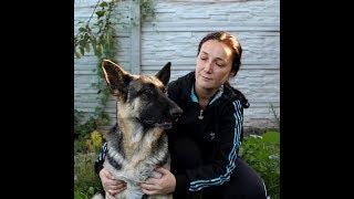 Прививка собаке.Делаем ежегодную вакцинацию дома.Сам себе ветеринар)))
