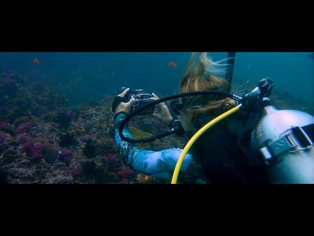 DEEP BLUE CONNECTION