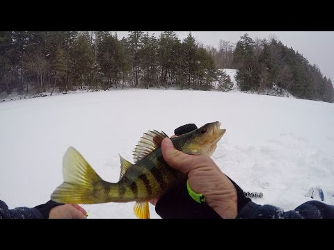 First Ice Chunky Vermont Perch
