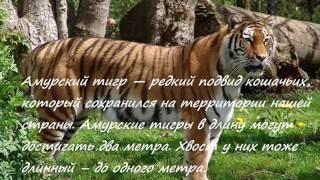 Животные из красной книги. Проект Матвеевой Юлии