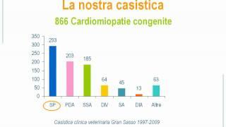Stenosi polmonare - Clinica Veterinaria Gran Sasso - Milano