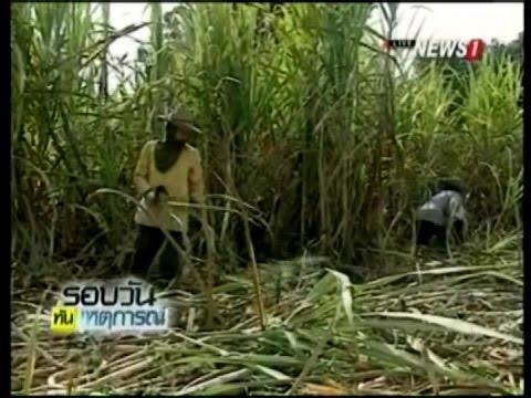 กองทุนอ้อยฯ-ธ.ก.ส. อัดสินเชื่อ 500 ล้าน อุ้มชาวไร่อ้อยประสบภัยแล้ง