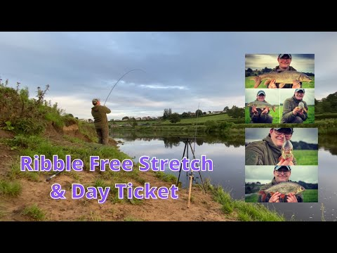 Barbel Fishing River Ribble Free Stretch And Day Ticket