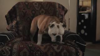 『パターソン』犬映像