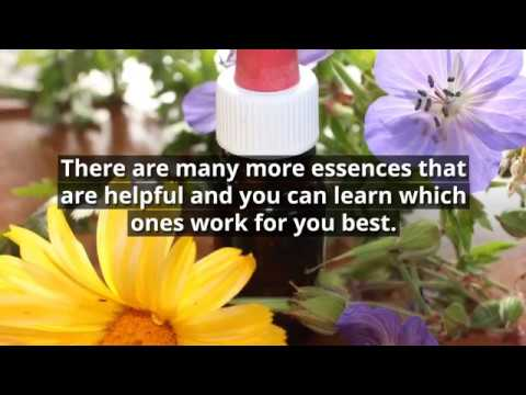 Essences For Anxiety, Stress and Sensitivity by Sally Arthurs
