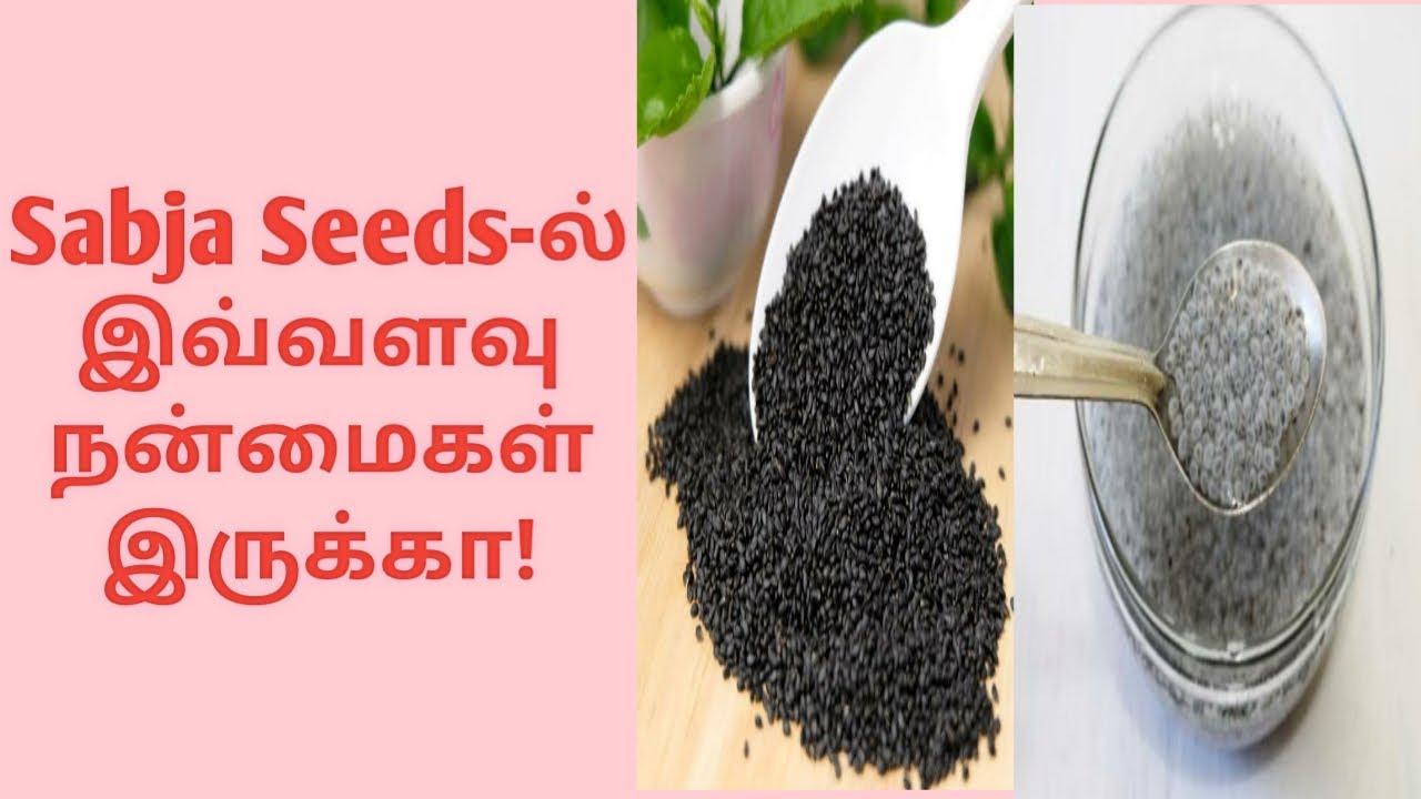 Sweet Basil Seeds Or Sabja Seeds Health Benefits Tamil Youtube