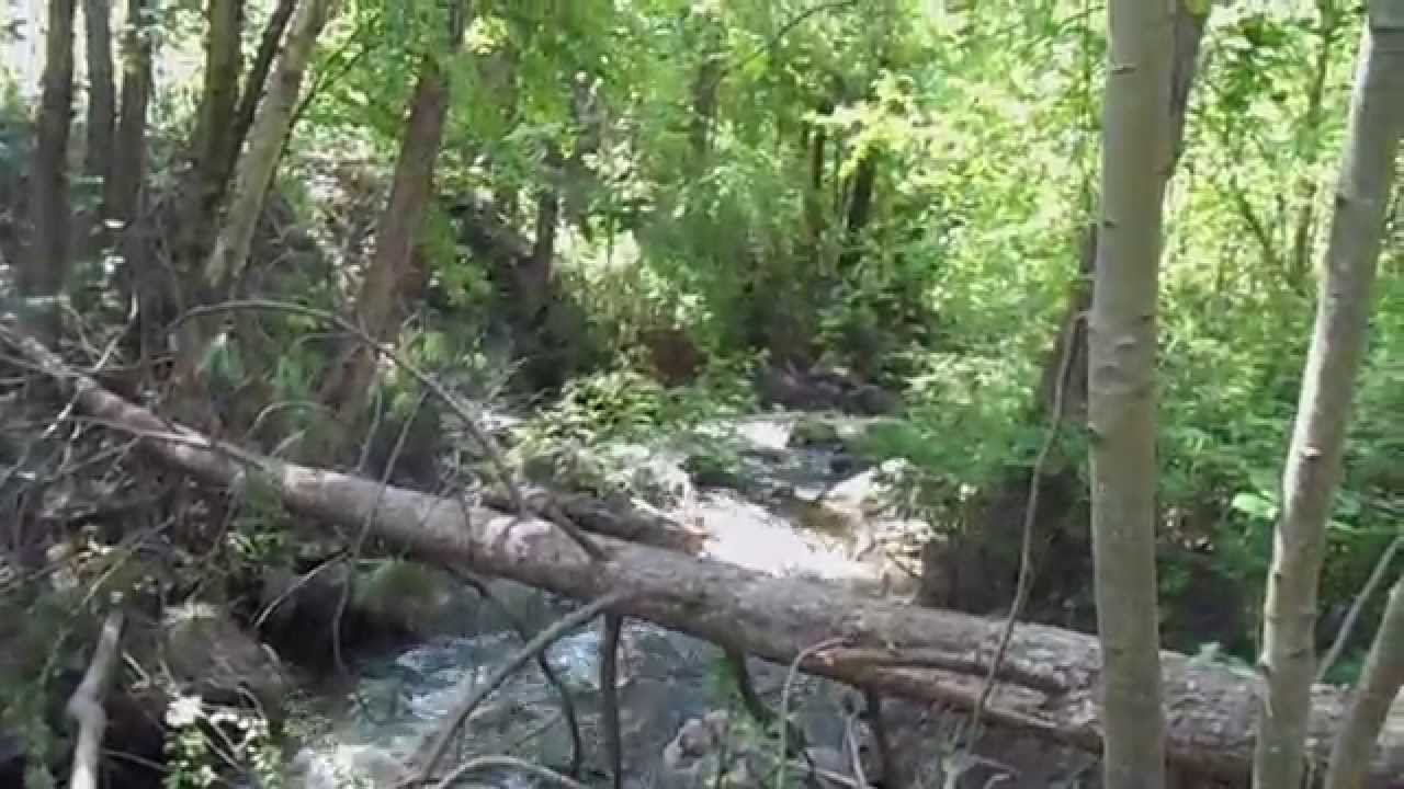 where does gold deposit finding gold on a small creek youtube