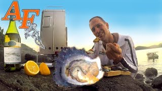 Smoked Fresh Wild Oysters Catch and Cook in New BBQ Smoker EP.416