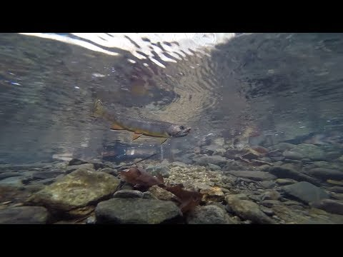 Guarding Our Waters - Trout Unlimited