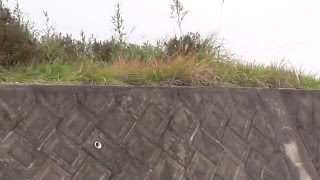 若葉上水タンク。このあたりに坑口があった。Wakaba water supply tank....