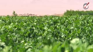 GMCH Agricultura sustentable en pleno desierto
