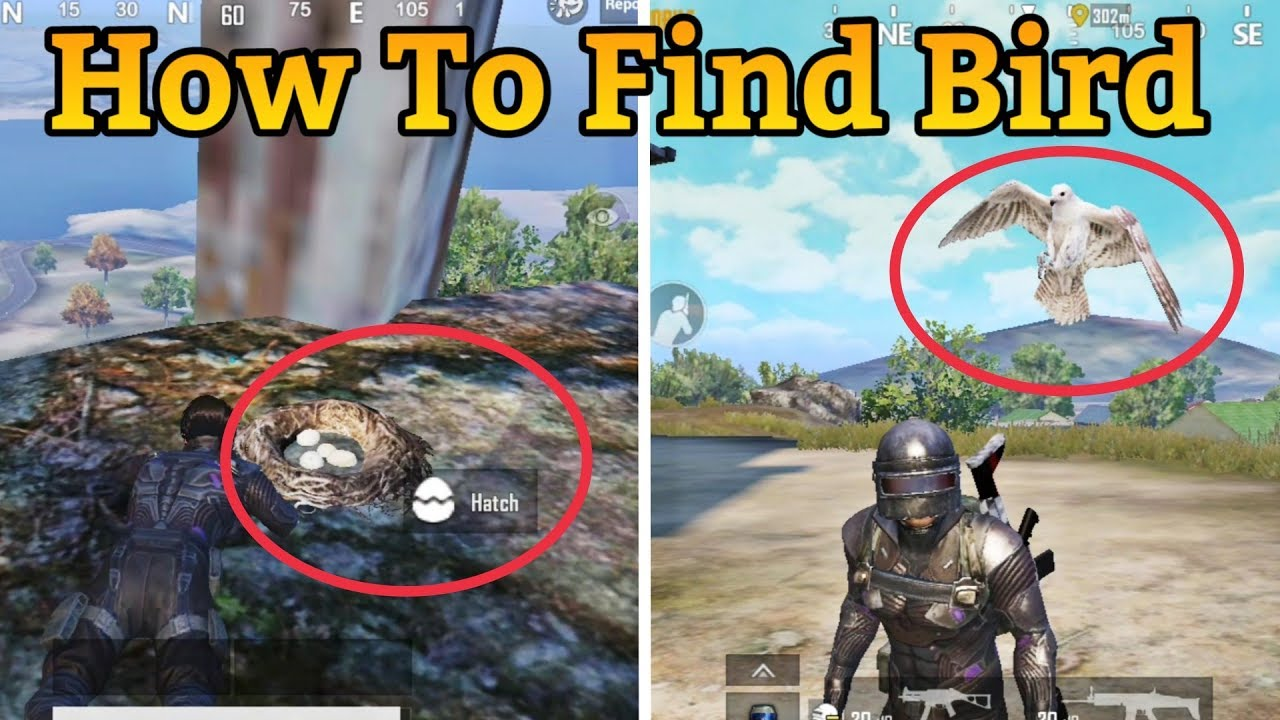"""Download HOW TO UNLOCK """"BIRD"""" IN PUBG MOBILE 
