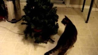 高らかに歌うツリーに困惑する猫、真面目な顔で強制捜査
