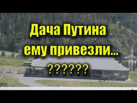 Дача Путина на Алтае - Путину привезли искуственные ели...