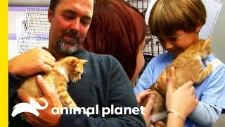 Are You Thinking Of Adopting A Kitten From A Shelter? | Cats 101