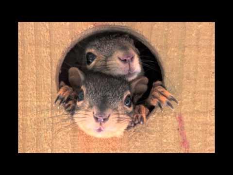 Squirrel Nest Box Cam