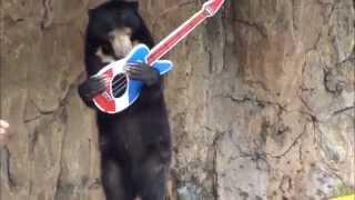 Beruang Bisa Main Gitar