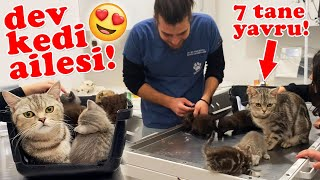 THE BIG FAMILY OF CATS! A Mommy with 7 Babies! 😍 #TheVet