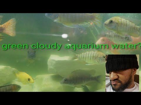 How To Get Rid Of Green Cloudy Aquarium Water? Fix A Cloudy Tank! Aquarium Water Change