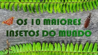 Gambar cover OS 10 MAIORES INSETOS DO MUNDO - BIO VLOG