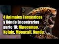 4 Animales Fantásticos y Dónde Encontrarlos parte 10: Hipocampo, Kelpie, Mooncalf, Nundu.
