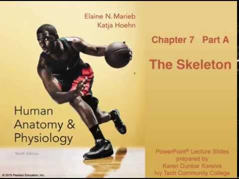 Anatomy and Physiology Chapter 7 Part A Lecture: The Skelton