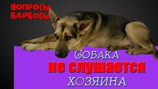 Собака не Слушается - что делать?  2 эффективных способа решить проблему(В этой передаче мы рассмотрим самую распространенную проблему всех собаковладельцев -