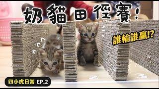 【黃阿瑪的後宮生活】奶貓田徑賽!四小虎日常EP.2