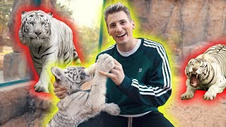 Feeding BABY WHITE TIGER at BILLIONAIRES PRIVATE ZOO!