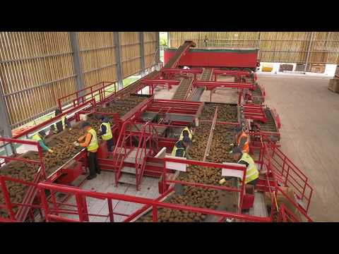 Potato Grading, Cleaning And Bulker Loading Line | Tong Engineering